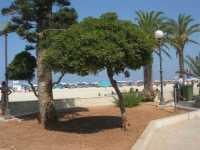 giardino pubblico adiacente alla spiaggia - 26 agosto 2009  - San vito lo capo (1657 clic)