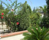 un angolo del nostro giardino - 5 agosto 2007  - Alcamo (992 clic)