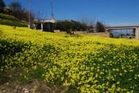 una esplosione di giallo - 21 febbraio 2009  - Alcamo (2592 clic)