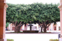 ex Quartiere Spagnolo, attuale sede del Palazzo del Comune: l'atrio con alberi e fontana - 24 settembre 2007  - Marsala (899 clic)