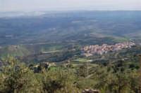 panorama con uliveto in primo piano ed il piccolo paese di Sant'Anna (frazione di Caltabellotta) poco distante - 9 novembre 2008    - Caltabellotta (1701 clic)