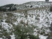 neve sul monte Bonifato - 15 febbraio 2009     - Alcamo (2433 clic)