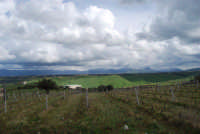 montagne innevate ad est - vigneti in primo piano - 13 febbraio 2009   - Alcamo (2335 clic)