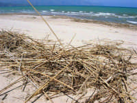 zona Canalotto: la spiaggia nel giorno della Pasquetta - 9 aprile 2007  - Alcamo marina (919 clic)