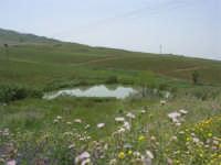 paesaggio rurale - 17 maggio 2009  - Salemi (2297 clic)