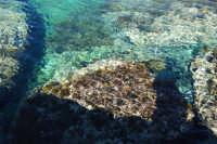 Golfo del Cofano: mare stupendo - 24 febbraio 2008  - San vito lo capo (623 clic)