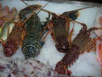 pesci esposti presso il Ristorante Sansica Sirena - 6 settembre 2007  - Bonagia (4776 clic)