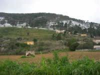 alle pendici del monte Bonifato innevato - 15 febbraio 2009   - Alcamo (2232 clic)