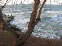 Capo Lilybeo - 1 febbraio 2009   - Marsala (2490 clic)
