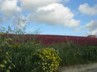 i colori della campagna a primavera - 25 aprile 2008  - Camporeale (1847 clic)