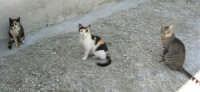 gatti in posa - 14 maggio 2006  - Chiusa sclafani (2211 clic)