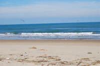 Spiaggia Plaja - volo di gabbiani - 21 febbraio 2009  - Castellammare del golfo (1801 clic)