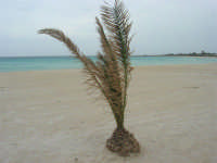 la spiaggia ed il mare spazzati dallo scirocco - 29 marzo 2009  - San vito lo capo (1707 clic)