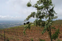 panorama dal monte Erice - 1 maggio 2009  - Erice (2055 clic)