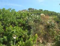 in cima alla rupe i ruderi del Castello Eufemio - 4 ottobre 2007  - Calatafimi segesta (940 clic)