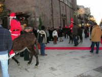 1ª Sfilata Asini a cura della Ass. Cultura Turismo Equestre LA STAFFA - 26 dicembre 2006  - Alcamo (1263 clic)
