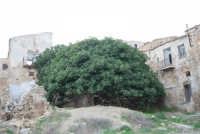 ruderi del paese distrutto dal terremoto del gennaio 1968- ficaia - 2 ottobre 2007   - Poggioreale (763 clic)