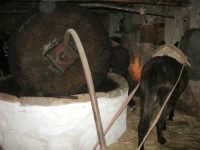 Il Presepe Vivente di Custonaci nella grotta preistorica di Scurati (grotta Mangiapane) (156) - 26 dicembre 2007   - Custonaci (995 clic)