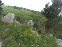 sul monte Erice - 1 maggio 2009    - Erice (1733 clic)
