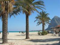le palme, la spiaggia, il mare - 24 febbraio 2008   - San vito lo capo (588 clic)