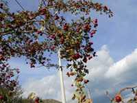 azzalora - sulla montagna nei pressi della Baia di Guidaloca - 8 dicembre 2009  - Castellammare del golfo (1896 clic)