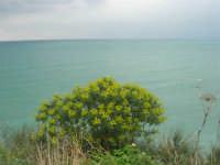 vista sul Golfo di Castellammare - 22 marzo 2009  - Castellammare del golfo (987 clic)