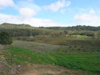 Bosco di Scorace - 18 gennaio 2009  - Buseto palizzolo (2089 clic)