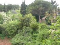 Il bosco presso l'Abbazia Benedettina - 17 aprile 2006  - San martino delle scale (2753 clic)