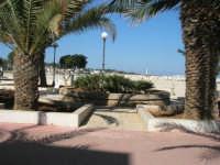 giardino pubblico ai bordi della spiaggia - 24 febbraio 2008  - San vito lo capo (639 clic)
