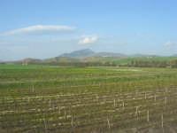 GALLITELLO - paesaggio rurale - all'orizzonte il monte Bonifato - 1 marzo 2009   - Alcamo (2576 clic)