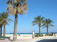 le palme, la spiaggia, il mare - 24 febbraio 2008   - San vito lo capo (709 clic)