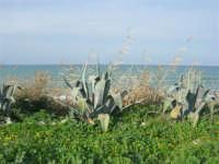C/da Magazzinazzi - il mare d'inverno - 11 gennaio 2009   - Alcamo marina (2409 clic)