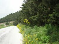 sul monte Erice, ai margini del bosco - 1 maggio 2009   - Erice (1863 clic)