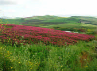 i colori della campagna a primavera - 25 aprile 2008  - Camporeale (2500 clic)