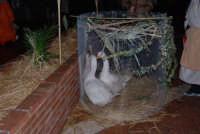 Presepe Vivente curato dall'Istituto Comprensivo G. Pascoli (6) - 22 dicembre 2007  - Castellammare del golfo (596 clic)
