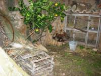 Il Presepe Vivente di Custonaci nella grotta preistorica di Scurati (grotta Mangiapane) (162) - 26 dicembre 2007   - Custonaci (1027 clic)