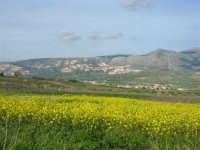 paesaggio rurale - 21 febbraio 2009  - Balata di baida (5223 clic)