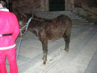 1ª Sfilata Asini a cura della Ass. Cultura Turismo Equestre LA STAFFA - 26 dicembre 2006  - Alcamo (1155 clic)