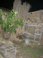 Il Presepe Vivente di Custonaci nella grotta preistorica di Scurati (grotta Mangiapane) (163) - 26 dicembre 2007   - Custonaci (867 clic)