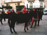 1ª Sfilata Asini a cura della Ass. Cultura Turismo Equestre LA STAFFA - 26 dicembre 2006   - Alcamo (1321 clic)