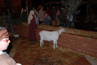 Presepe Vivente animato da alunni dell'Istituto Comprensivo G. Pascoli (7) - 22 dicembre 2007  - Castellammare del golfo (592 clic)