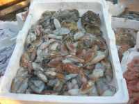al porto - pesci - 7 dicembre 2009   - Sciacca (5177 clic)
