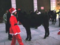 1ª Sfilata Asini a cura della Ass. Cultura Turismo Equestre LA STAFFA - 26 dicembre 2006  - Alcamo (1223 clic)