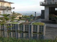 Tempo di raccolta di olive: contenitori colmi - 9 novembre 2008  - Caltabellotta (4681 clic)