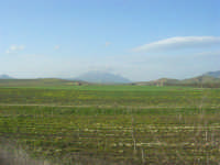 GALLITELLO - paesaggio rurale - all'orizzonte il monte Inici - 1 marzo 2009   - Alcamo (2085 clic)