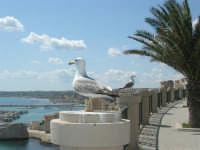 dal belvedere, vista sul porto con gabbiani - 25 aprile 2008   - Sciacca (1806 clic)