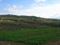 Bosco di Scorace - 18 gennaio 2009  - Buseto palizzolo (2512 clic)