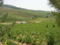 Baglio Ardigna - panorama - 17 maggio 2009  - Salemi (3945 clic)