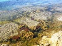 C/da Birgi Novo - i colori della scogliera - 25 maggio 2008  - Marsala (739 clic)
