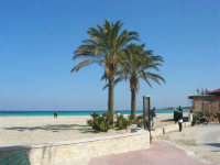 le palme, la spiaggia, il mare - 24 febbraio 2008  - San vito lo capo (603 clic)